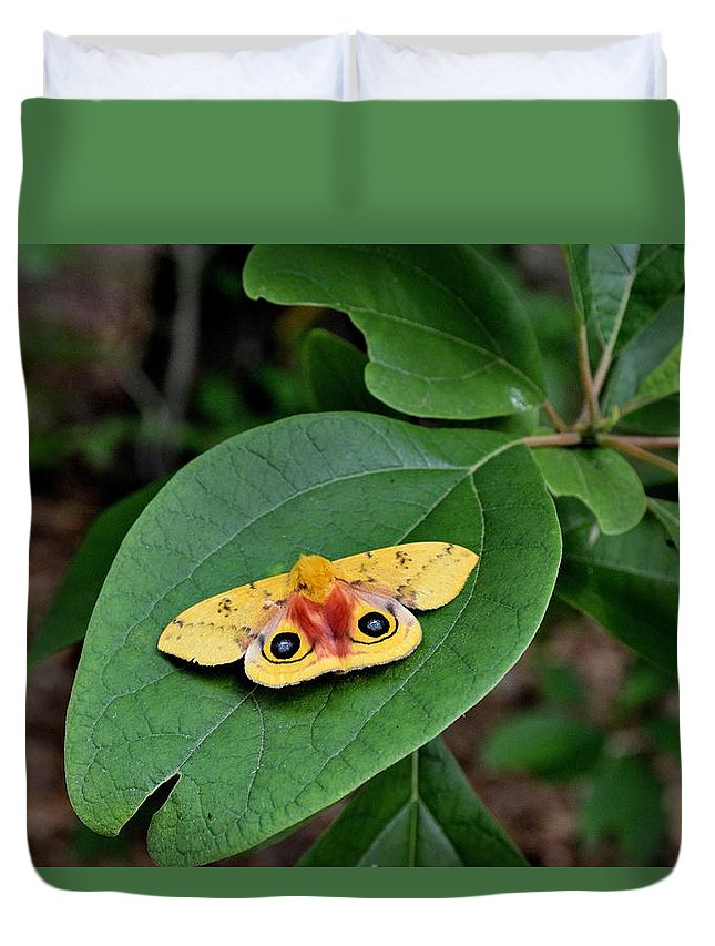 Insects Duvet Cover featuring the photograph Todays Art 775 by Lawrence Hess