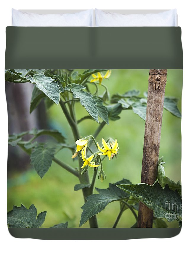 Tomato Duvet Cover featuring the photograph Tomato Flowers by D R