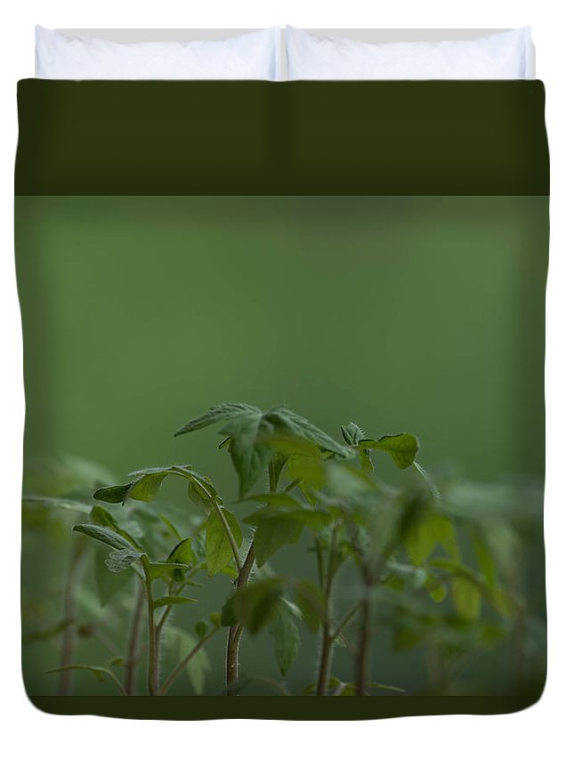 Agriculture Duvet Cover featuring the photograph Tomato seedlings in the morning by Adrian Bud