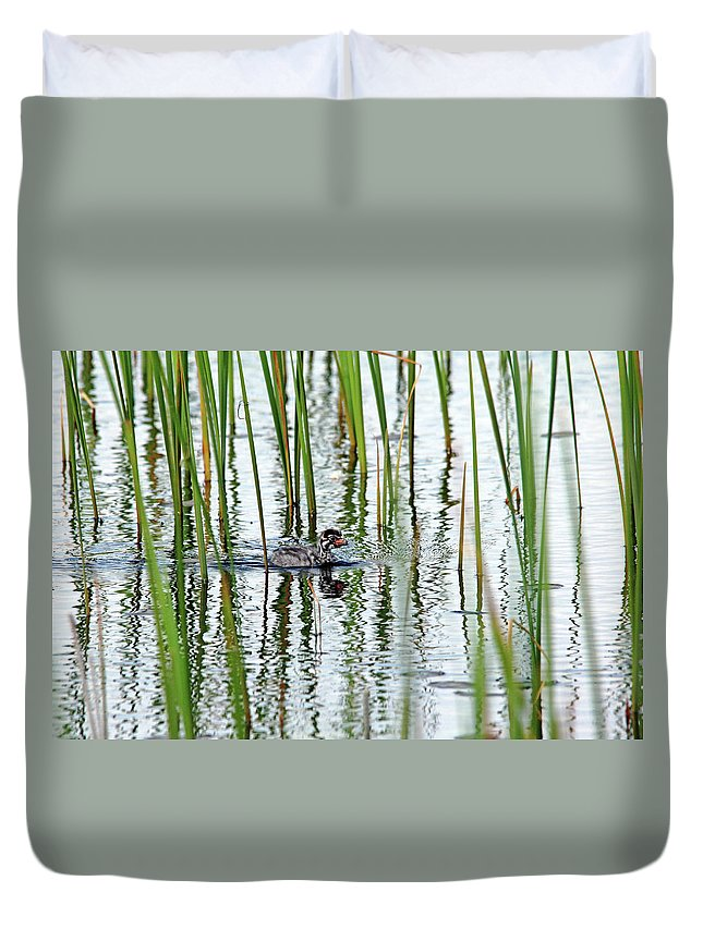 Pied Billed Grebe Duvet Cover featuring the photograph Too Cute by Debbie Oppermann