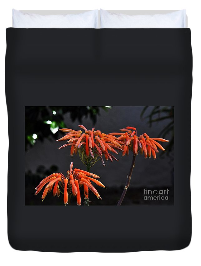 Clay Duvet Cover featuring the photograph Top Of Aloe Vera by Clayton Bruster