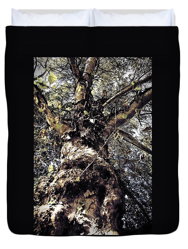 Tree. Forest. Leaf Duvet Cover featuring the photograph Topiary by Scott Wyatt