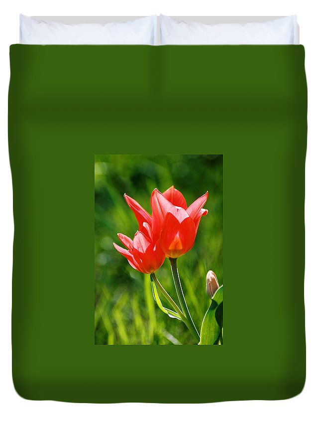 Flowers Duvet Cover featuring the photograph Toronto Tulip by Steve Karol