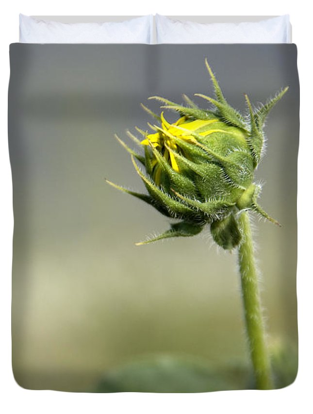 Sunflowers Duvet Cover featuring the photograph Touch Of Yellow by Jackie Farnsworth