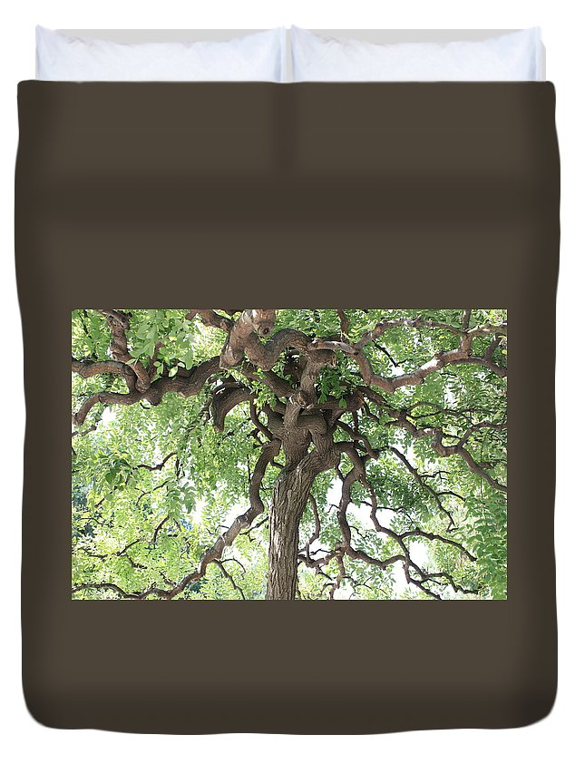 Tree Duvet Cover featuring the photograph Tree At Ming Tombs by Carol Groenen