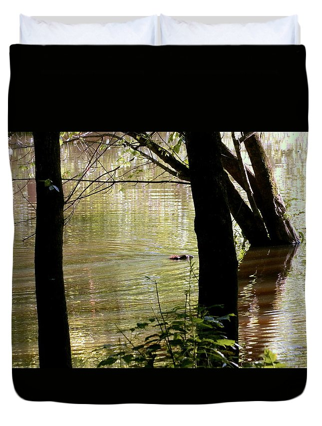 Pond Duvet Cover featuring the photograph Tree Bowing To Swimming Beaver by Kathy Barney