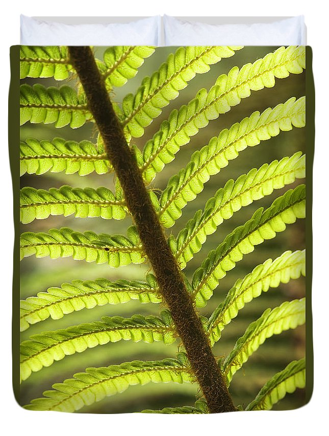 Abstract Duvet Cover featuring the photograph Tree Fern Frond by Greg Vaughn - Printscapes