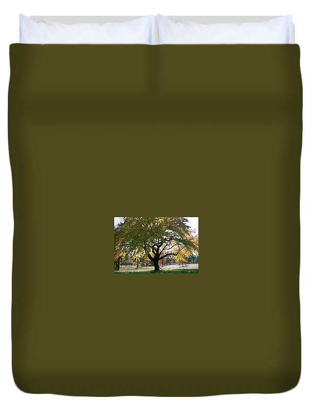 Tree Duvet Cover featuring the photograph Tree by Flavia Westerwelle