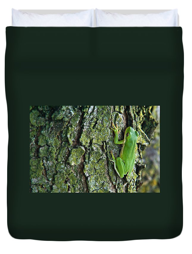 Tree Duvet Cover featuring the photograph Tree Frog Climbing Lichen Covered Tree by Douglas Barnett