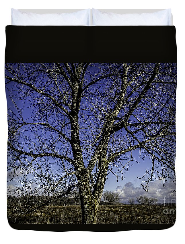 Blue Duvet Cover featuring the photograph Tree Of Blue by Doug Daniels