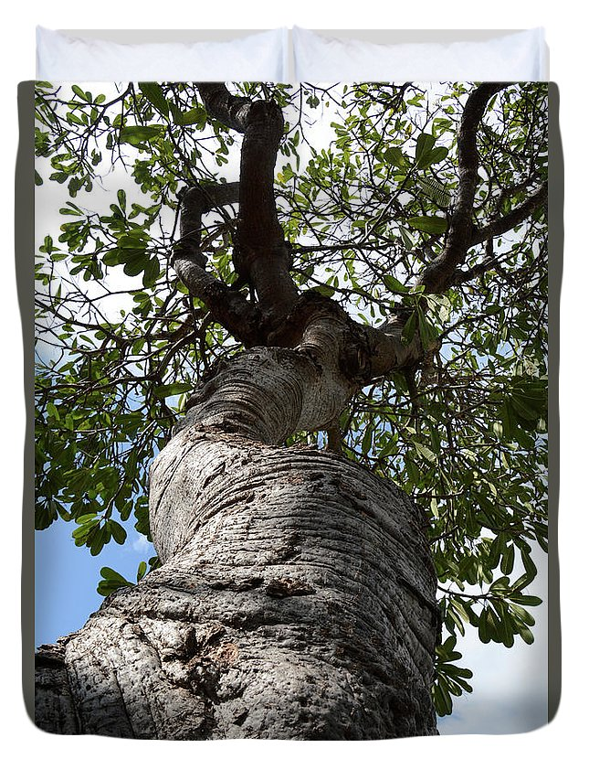 Trees Duvet Cover featuring the photograph Tree Of Life by Gabrielle Yap