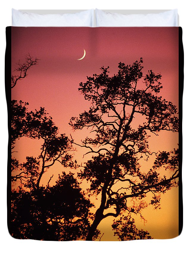 Allan Seiden Duvet Cover featuring the photograph Tree Silhouette by Allan Seiden - Printscapes