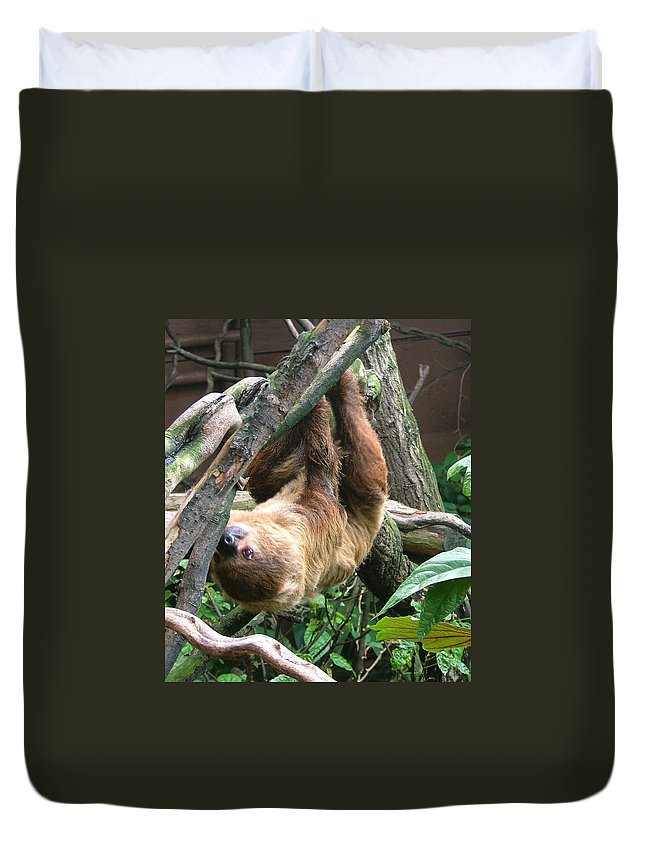 Photograph Duvet Cover featuring the photograph Tree Sloth by Heather Lennox