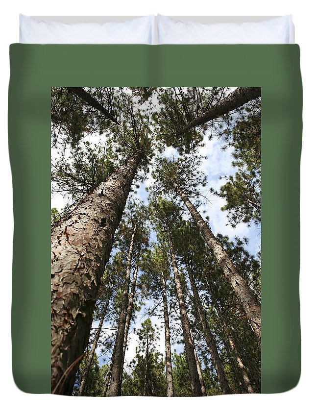 Autumn Duvet Cover featuring the photograph Tree Stand by Margie Wildblood