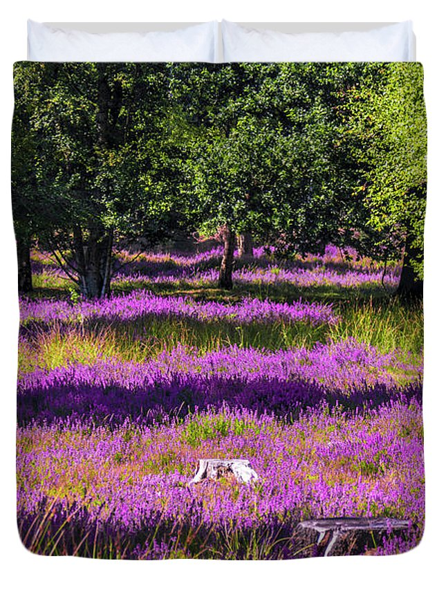 Common Heather Duvet Cover featuring the photograph Tree Stumps In Common Heather Field by Wim Lanclus
