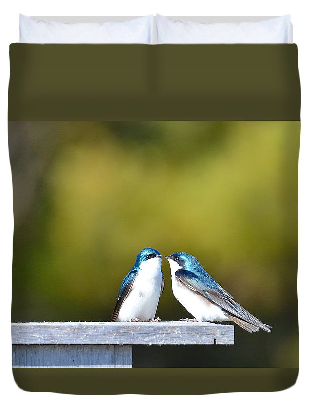 Birds Duvet Cover featuring the photograph Tree Swallows by Jamie Lenh