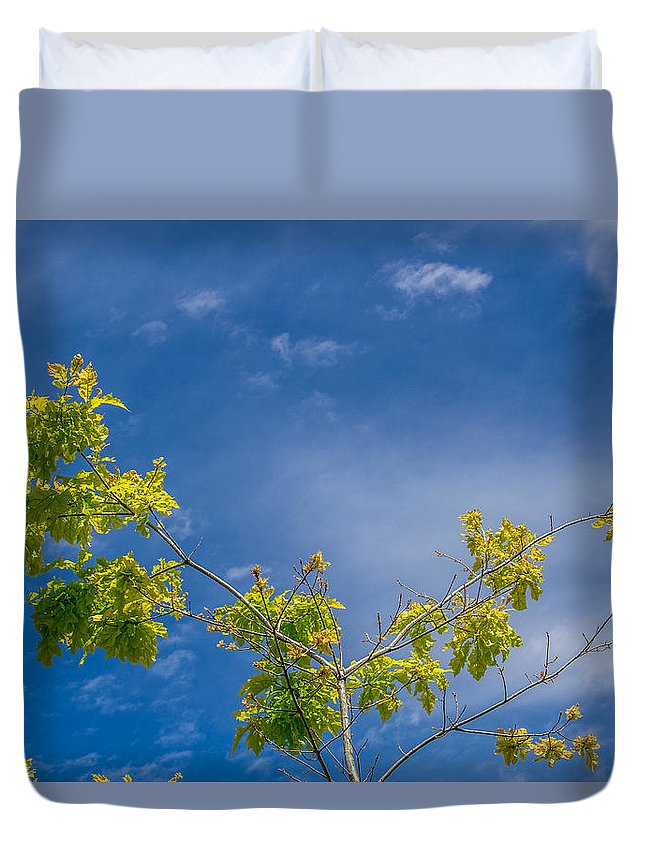 Flowers Duvet Cover featuring the photograph Tree To Sky II by Tammy Bryant