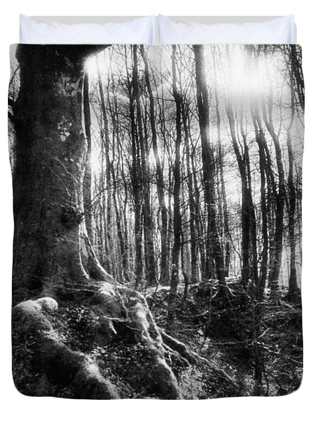 Vale; Legendary; Wood; Woods; Woodland; Landscape; Rural; Countryside; Magical; Mysterious; Fairytale; Bare Trees; Atmospheric; Dramatic; Eerie; Spooky; French; Moonlight; Moonlit Duvet Cover featuring the photograph Trees At The Entrance To The Valley Of No Return by Simon Marsden