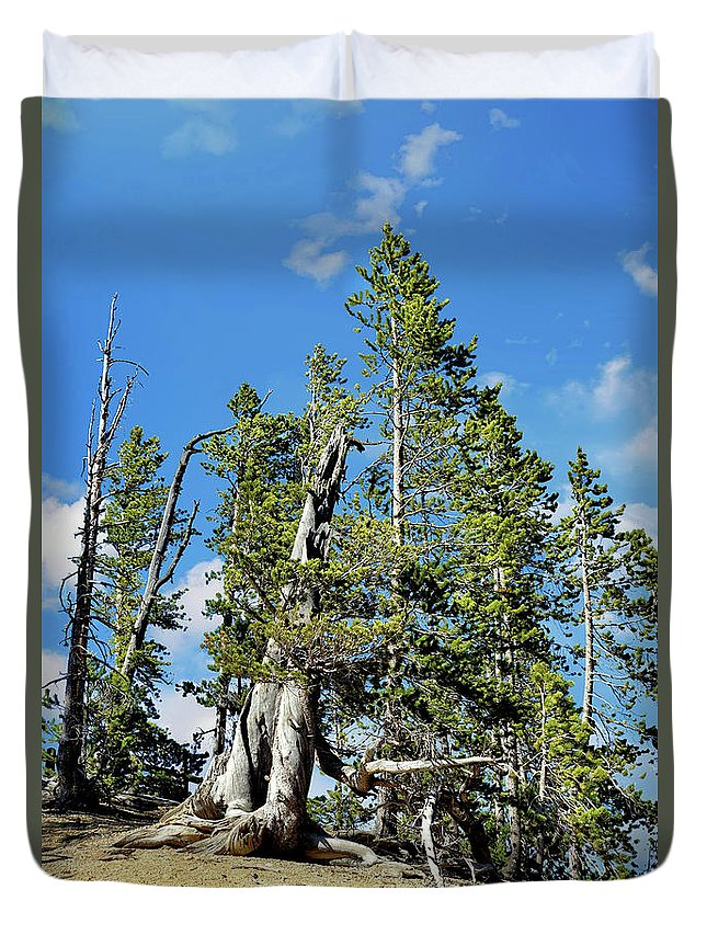 Trees Duvet Cover featuring the photograph Trees On The Edge 1 by John Trommer