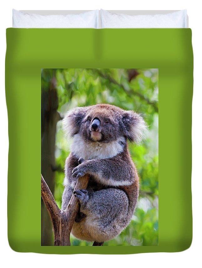 Koala Duvet Cover featuring the photograph Treetop Koala by Mike Dawson