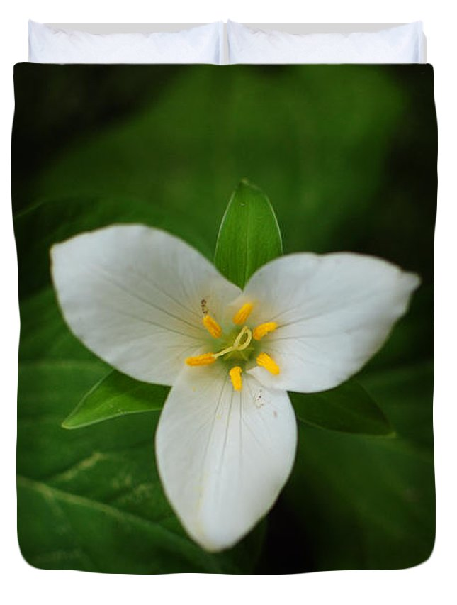 Trillium Duvet Cover featuring the photograph Trillium by Stevyn Llewellyn