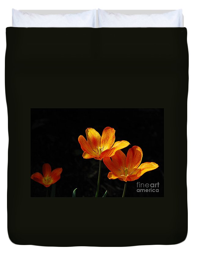 Tulips Duvet Cover featuring the photograph Triples by Lois Bryan