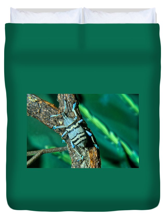 Blue Duvet Cover featuring the photograph Tropical Blue Weevil by Douglas Barnett