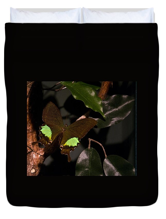 Tropical Duvet Cover featuring the photograph Tropical Buterfly by Douglas Barnett