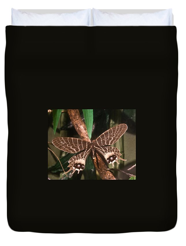 Butterfly Duvet Cover featuring the photograph Tropical Butterfly by Douglas Barnett