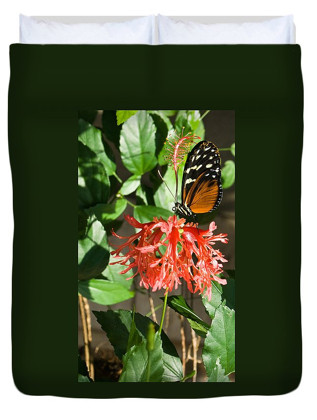 Tropical Duvet Cover featuring the photograph Tropical Butterfly On Flower by Douglas Barnett
