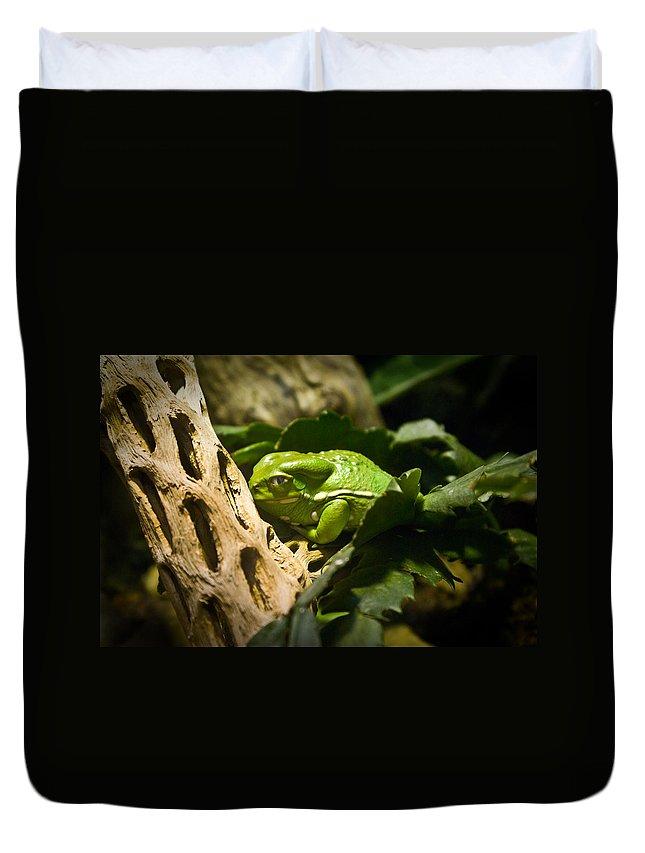 Amphibian Duvet Cover featuring the photograph Tropical Green Frog by Douglas Barnett