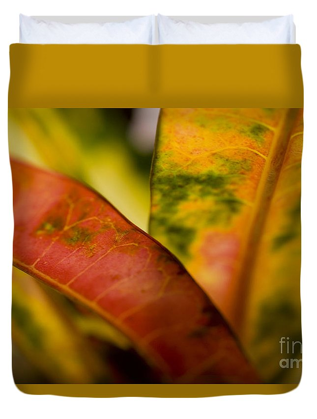83-pfs0184 Duvet Cover featuring the photograph Tropical Leaf Abstract by Ray Laskowitz - Printscapes
