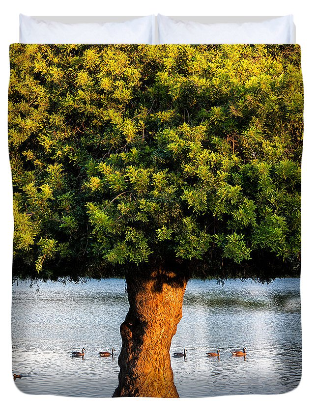 California Duvet Cover featuring the photograph Trying To Get My Ducks In A Row. by Wasim Muklashy