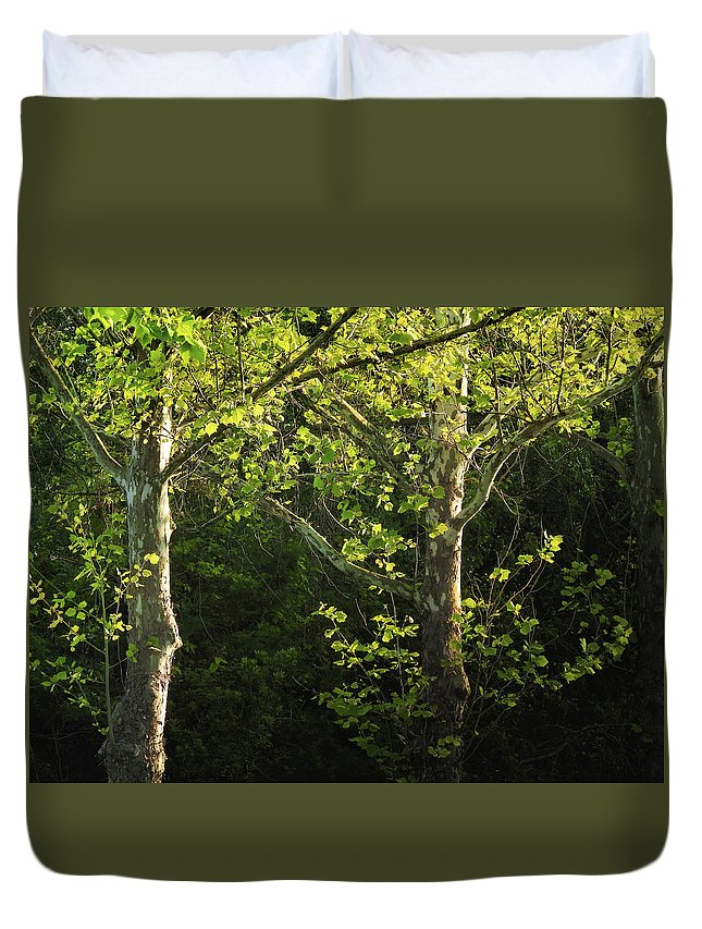 Maple Duvet Cover featuring the photograph Branches Of Lovely Light by Laura Ragland