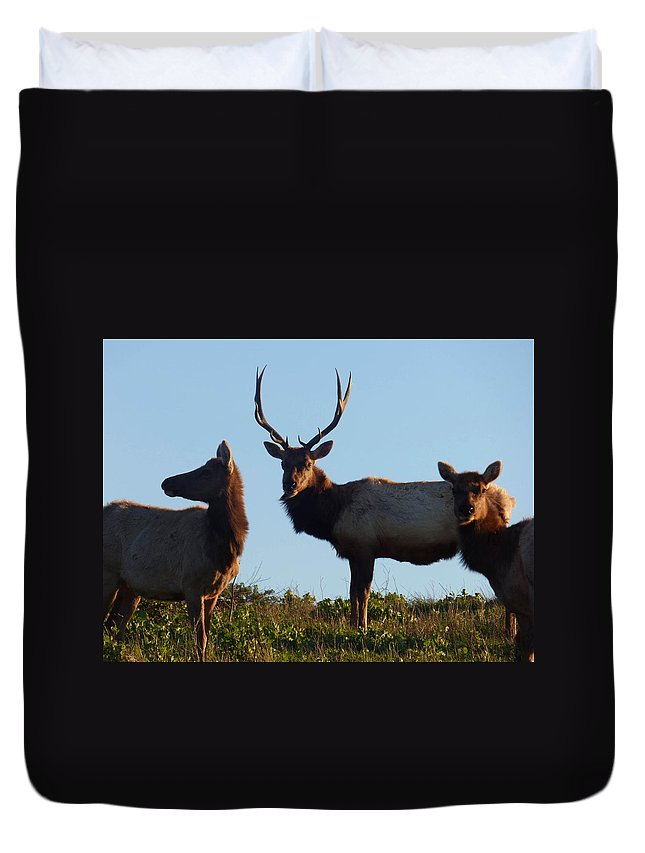 Wildlife Duvet Cover featuring the photograph Tule Elk Bull And Harem by Andrea Freeman