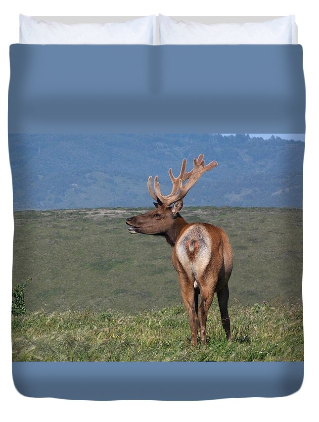 Wildlife Duvet Cover featuring the photograph Tule Elk Bull Bugling by Andrea Freeman