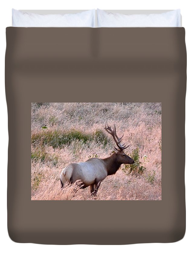 Wildlife Duvet Cover featuring the photograph Tule Elk Bull In Grassland Meadow by Andrea Freeman