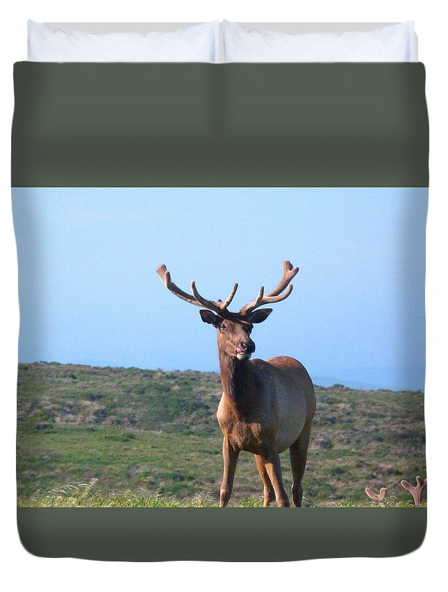 Wildlife Duvet Cover featuring the photograph Tule Elk Bull In Grassland Near Drake's Bay by Andrea Freeman
