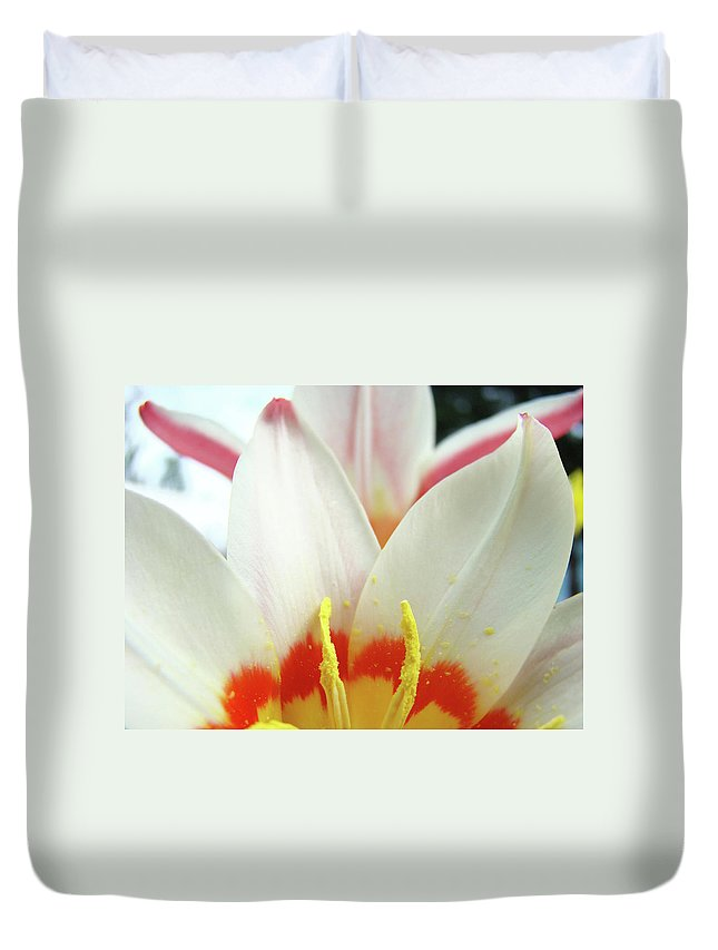 �tulips Artwork� Duvet Cover featuring the photograph Tulip Flowers Art Prints 4 Spring White Tulip Flower Macro Floral Art Nature by Baslee Troutman