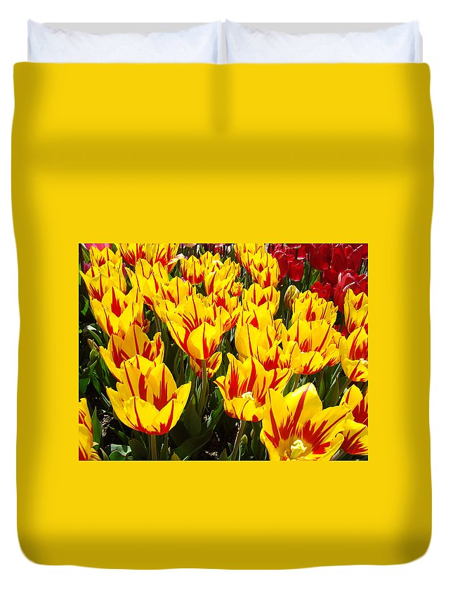 Tulip Duvet Cover featuring the photograph Tulip Flowers Festival Yellow Red Art Prints Tulips by Baslee Troutman