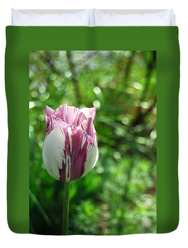 Tulip Duvet Cover featuring the photograph Tulip Morn by Trish Hale