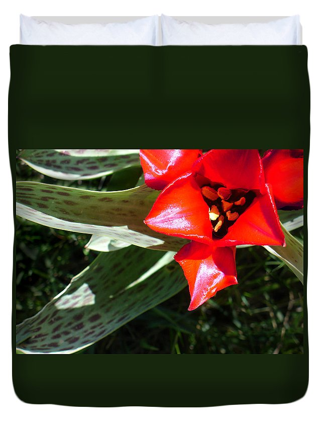 Tulip Duvet Cover featuring the photograph Tulip by Steve Karol