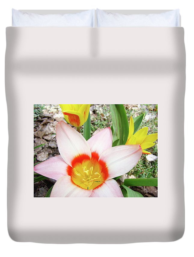 �tulips Artwork� Duvet Cover featuring the photograph Tulips Artwork 9 Spring Floral Pink Tulip Flowers Art Prints by Baslee Troutman