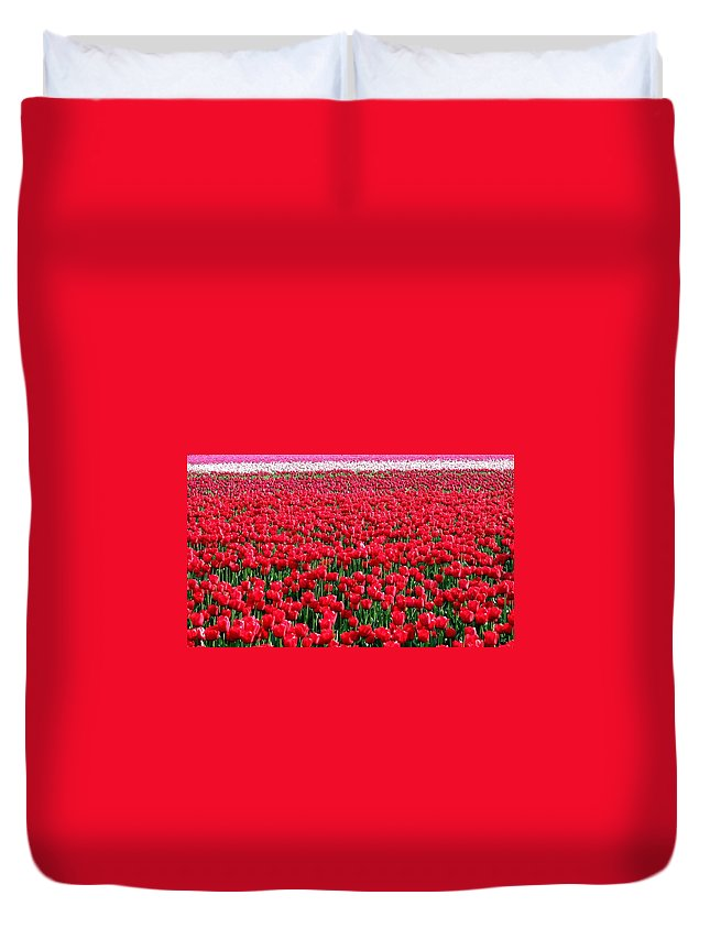 Tulips Duvet Cover featuring the photograph Tulips By The Million by Will Borden