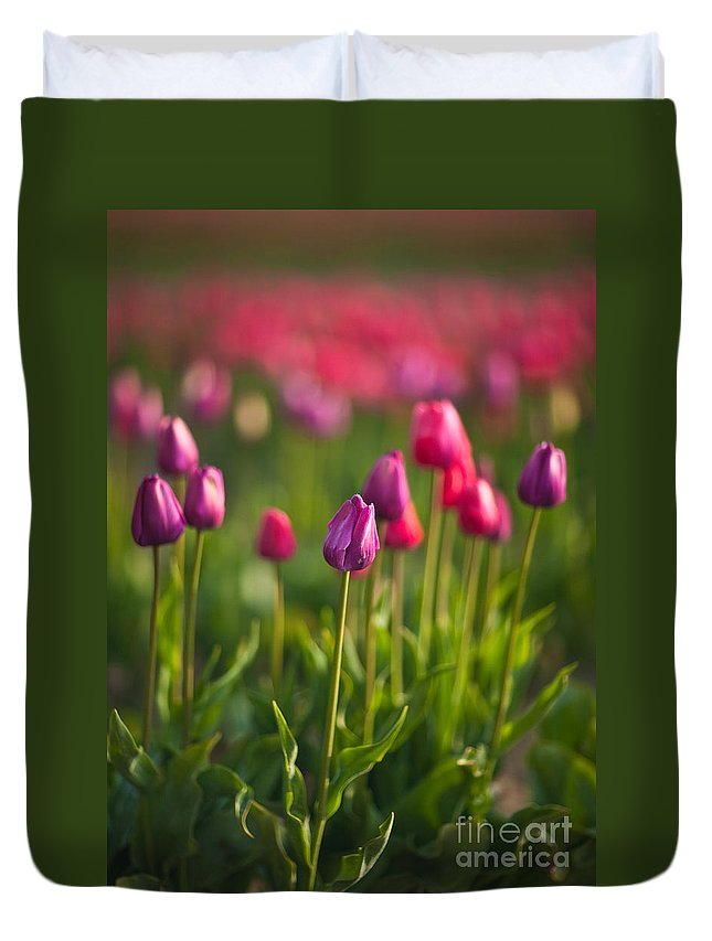 Tulip Duvet Cover featuring the photograph Tulips Dream by Mike Reid
