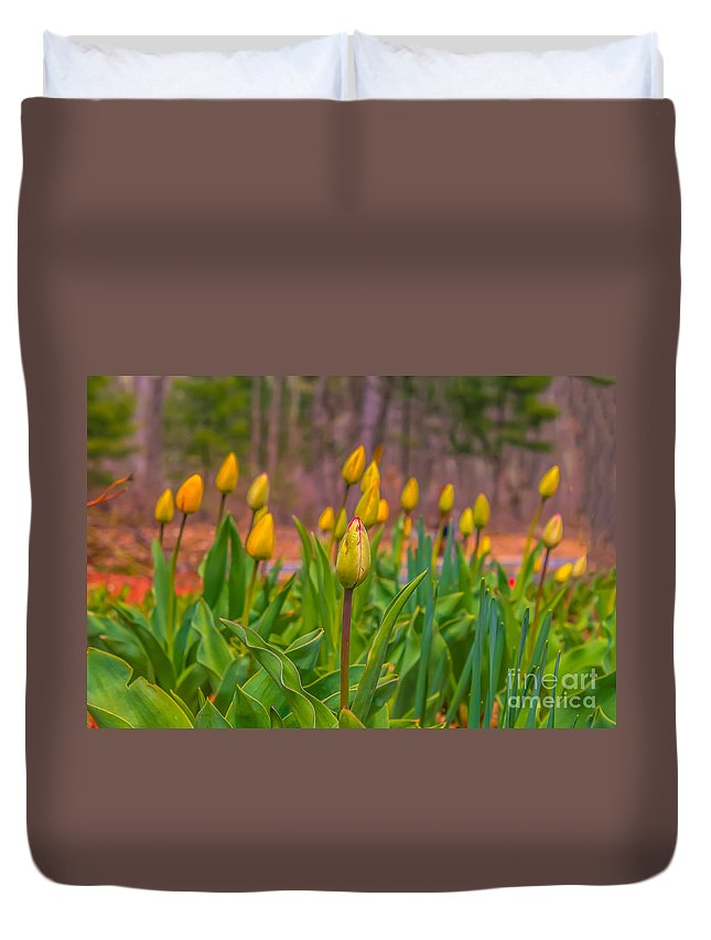 Spring Floral Duvet Cover featuring the photograph Tulips Love by Claudia M Photography