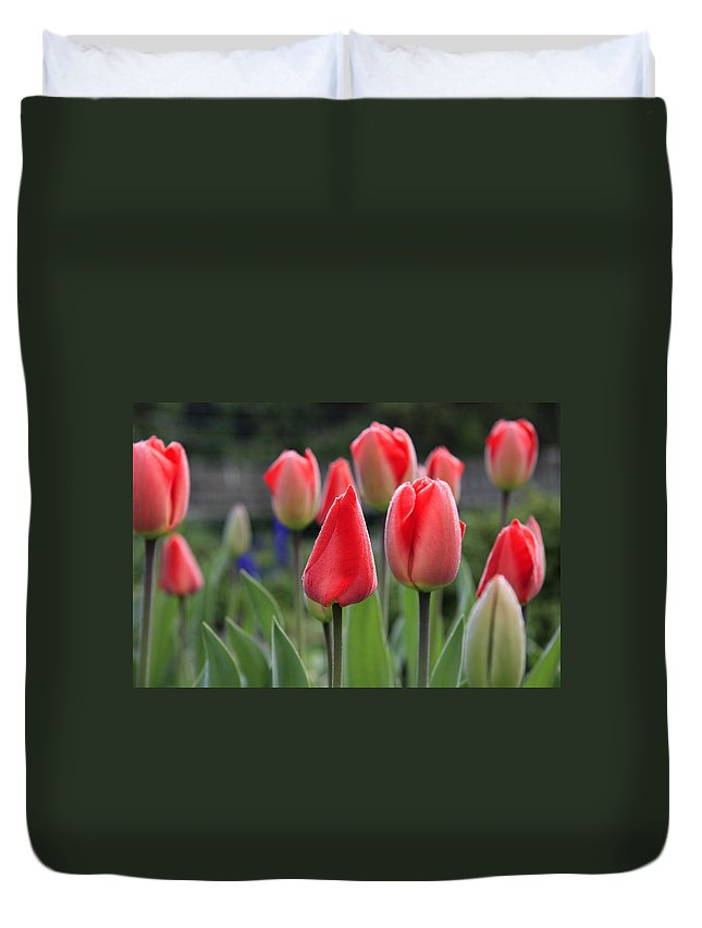 Tulips Duvet Cover featuring the photograph Tulips by Phil Crean