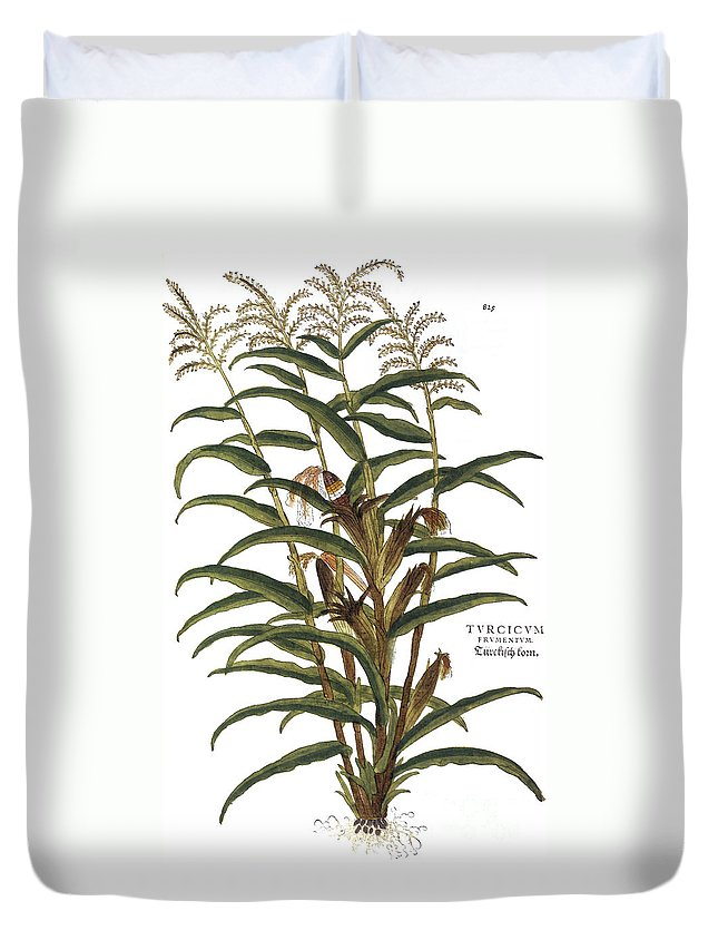 1730s Duvet Cover featuring the photograph Turkish Corn, 1735 by Granger