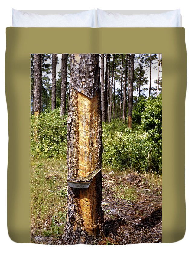 Turpentine Duvet Cover featuring the photograph Turpentine Tree by Marilyn Hunt