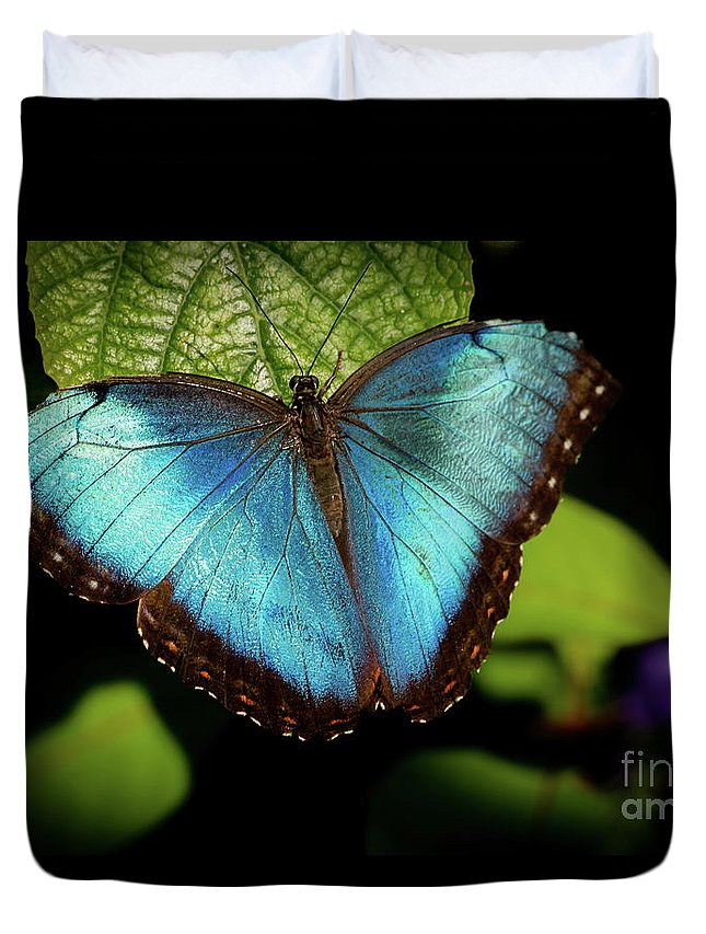 Spring Duvet Cover featuring the photograph Turquoise Beauty by Sabrina L Ryan